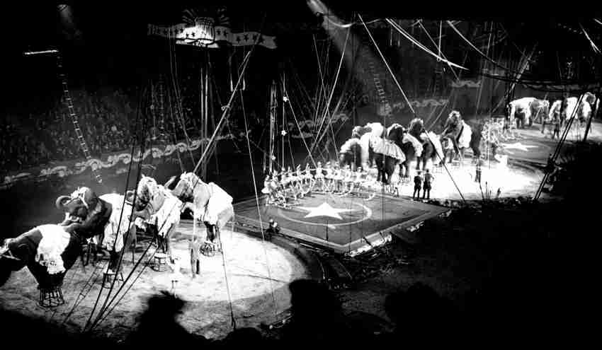 Circuses and Sideshows Internet Database